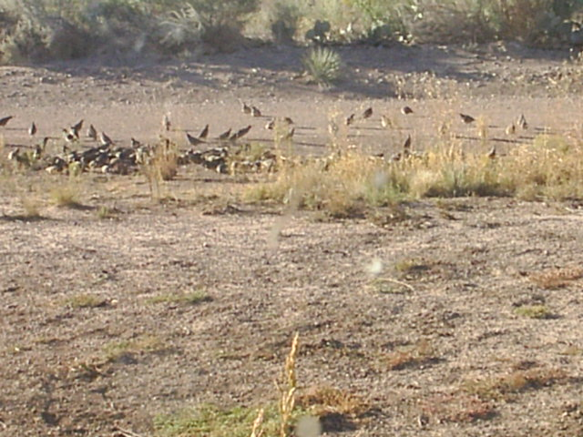 About 30 Quail